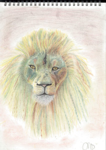 colour pastel drawing of a lion's head